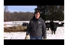 Beef Cow-calf Operation