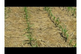 No-till and Cover Crops: Tips for Management