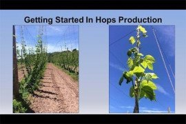 Getting Started in Hops Production