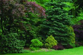 Scouting and Controlling Woody Ornamental Diseases in Landscapes and Nurseries