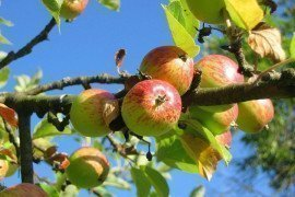 Pesticide Applicator Certification Study Materials - Fruit and Nuts