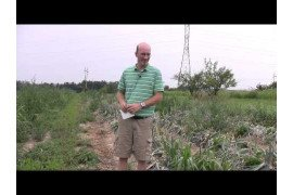 Onion Harvest and Grower Interview