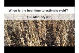 Estimating Soybean Yields