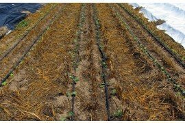 Determining How Long to Run Drip Irrigation Systems for Vegetables