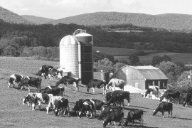 Partial Budgeting for Agricultural Businesses