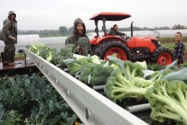 Keeping Produce Fresh: Best Practices for Producers