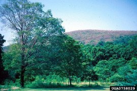 Assessing Tree Condition-Health and Structure