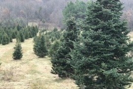 Christmas Tree Farm Photo credit: Nancy Knauss