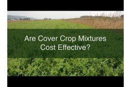 Are Cover Crop Mixtures Cost Effective?
