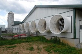 Tunnel Ventilation for Tie Stall Dairy Barns