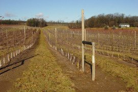 Trellis in apple orchard