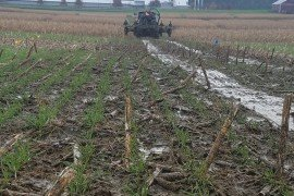 A field must have greater than 25% crop residue cover or a cover crop to be eligible for winter manure spreading, along with other restrictions. Photo credit: Charlie White