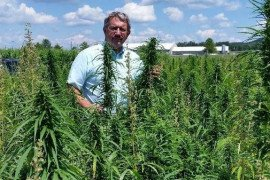 Hemp Plots at Rock Springs Photo: Greg Roth, Penn State