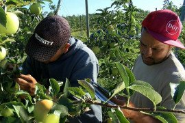 Young Latino growers learn how to scout an orchard during a hands-on field training.