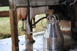 Frequently Asked Questions About Dairy Advisory Teams