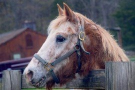 Equine Herpes Virus-1: What You Should Know