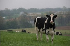 Dairy Business Improvement & Planning Conference