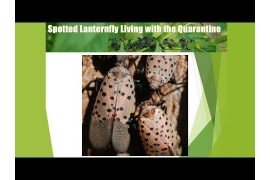 Spotted Lanternfly: Living with the Quarantine