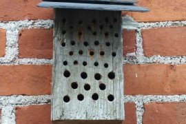 Mason bee house. Photo credit: Dyan Eisenberger