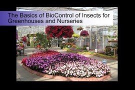 The Basics of Bio Control of Insects for Greenhouses and Nurseries