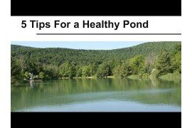 Five Tips for a Healthy Pond