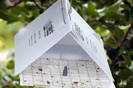 Codling moth monitoring trap. Photo: Greg Krawczyk, Penn State