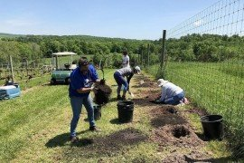 Volunteers from Penn State's Fruit Research and Extension Center help prepare holes for planting grapevines at Manatawny Creek Vineyard in Berks County, the location of the research. Image: Erica Smyers