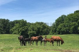 Tall Fescue poses a threat to grazing broodmares. Photo: Danielle N. Smarsh, Ph.D