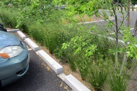 Tree trenches can be used in parking lots where a walkway system is being developed along shade trees. A tree trench is a system of trees connected by an underground infiltration structure. Photo: Thomas McCann, Penn State