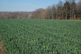 Corn Herbicides and Rotation to Cover Crops