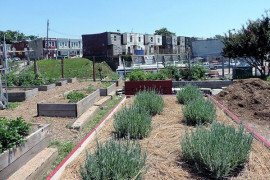 On the Road: Urban Agriculture in Philadelphia