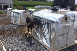Managing Heat Stress and Fly Control in Young Calves