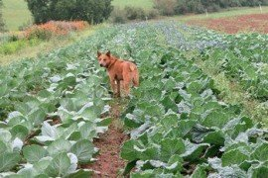 No permita que sus mascotas entren en el campo.