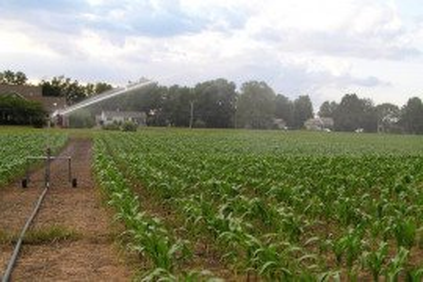 La irrigación se considera como agua de precosecha.