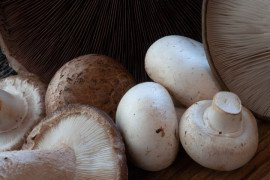 Mushroom GAPs Audit and FSMA Resources