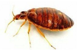 Got Bed Bugs? Eliminate Bed Bugs with IPM