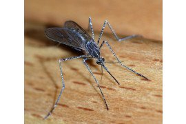Remember to Vaccinate your Horse for West Nile Virus!