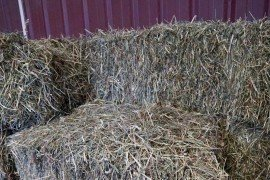Grass hay DV 3, by Danielle Smarsh