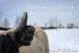Begin Your Horse's Spring Grooming