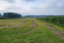 Fall Forage Management