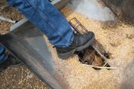 Keep away from grain augers