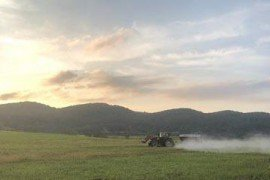 Lime application in a cover crop (photo credit: Justin Brackenrich)