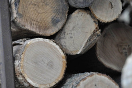 Timber Market Report: 2018 3rd Quarter
