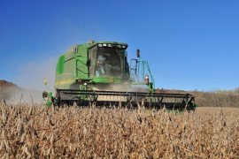 Pennsylvania average soybean yields are close to crossing 50 bushels for the first time this year. Zach Larson photo.