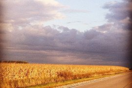 Corn field, photo by Elizabeth Hines