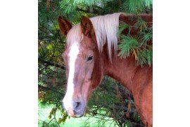 Humane Issues and Statutes Related to Horse Ownership in PA