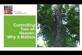 Controlling Tree of Heaven: Why it Matters