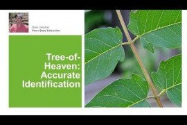 Tree of Heaven: Accurate Identification