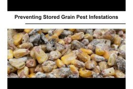 Preventing Stored Grain Pests