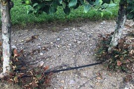 Drip irrigation in orchard. Photo: Long He, Penn State